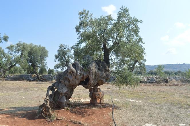 3000-olive